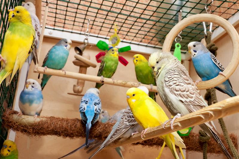 Ухаживать за попугаем в домашних условиях